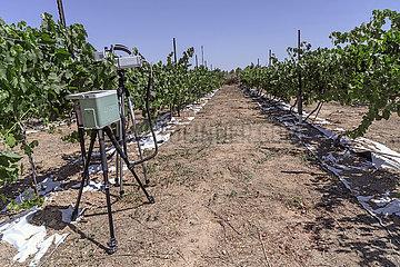 Weinanbau in der Wueste
