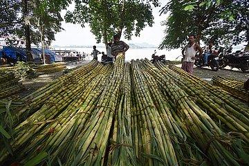 Indien-Assam-Guwahati-Zuckerrohre