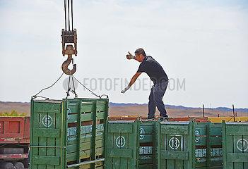 Porzellan-Xinjiang-Przewalskis Pferde-Erhaltungsbemühungen (CN) China-Xinjiang-Przewalskis Pferde-Erhaltungsbemühungen (CN) China-Xinjiang-Przewalskis Pferdeerhaltungsbemühungen (CN)