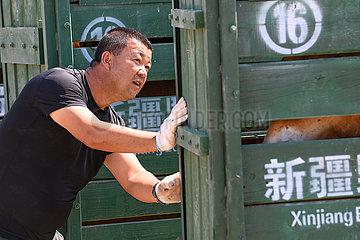 China-Xinjiang-Przewalskis Pferde-Erhaltungsbemühungen (CN)