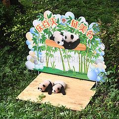 China-Chongqing-Panda-Zwillinge (CN)
