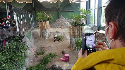 Finnland-Helsinki-ahtari Zoo-Riesige Panda-Geburtstag