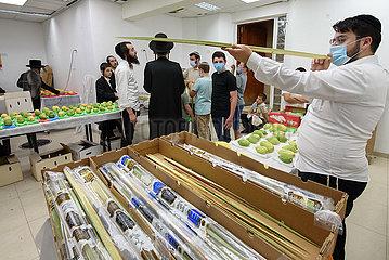 Israel-Safed-Sukkot-Vorbereitungen