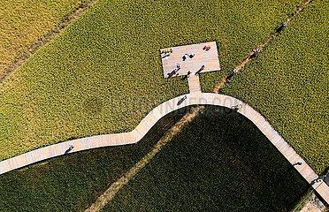 China-Zhejiang-Farm-Arbeitsspiele (CN)