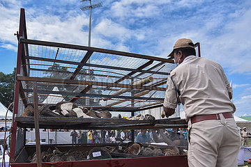 INDIA-ASSAM-GOLAGHAT-BURNING OF SEIZED RHINO HORN