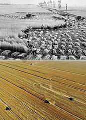 China-Henan-landwirtschaftliche Produktionsänderung (CN)