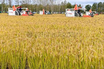 China-Jilin-Changchun-Harvest Festival (CN)