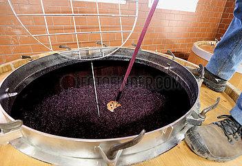 Frankreich-Mandelieu-la-Napoule-Winemaking Frankreich-Mandelieu-la-Napoule-Winemaking