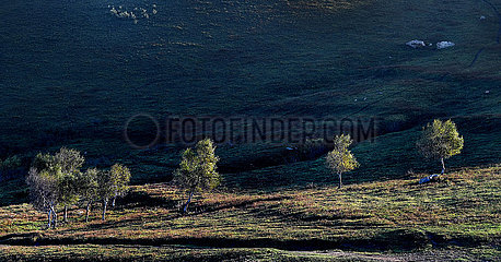 # China-shanxi-lingqiu-alpine Meadow-Ansicht (CN)