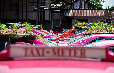 THAILAND-BANGKOK-TAXIS-OUT OF SERVICE-PLANTS