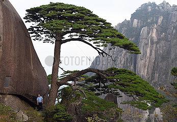 CHINA-ANHUI-HUANGSHAN MOUNTAIN-GREETING PINE-GUARDIAN (CN)