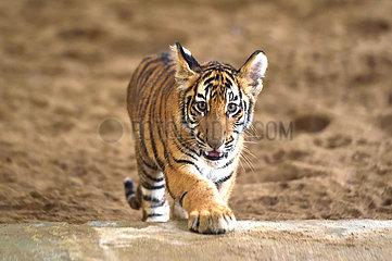 Bangladesch-Dhaka-Tiere