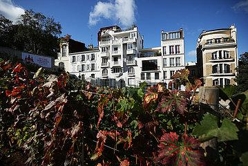 Frankreich-Paris-Montmartre-Vineyard