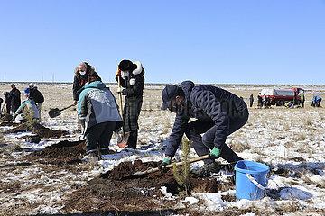 Mongolie-Ulan Bator-National Campaign-Tree-Anpflanzung