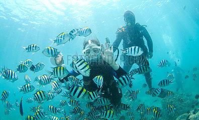 China-Hainan-Fenjiezhou-Insel-Unterwasserwelt (CN)