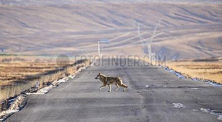 China-Qinghai-Tiere-Sanjiangyuan National Park (CN)
