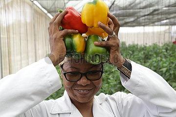 Tansania-Dar es Salaam-Green House-Capsicum
