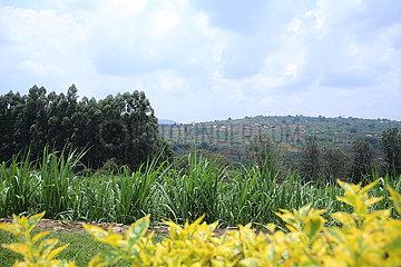 RWANDA-HUYE-CHINA-AGRICULTURE SUPPORT