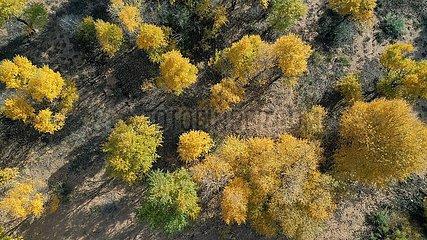 China-Ningxia-yanchi-Autumn-landschaft (CN)