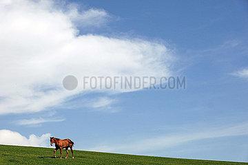 Gestuet Goerlsdorf  Pferd allein auf einer huegeligen Weide