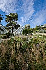 Blumenbeet vor Gewaechshaus  Botanischer Garten  Ruhr-Universitaet Bochum  Nordrhein-Westfalen  Deutschland