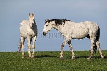 Gestuet Goerlsdorf  Pferde stehen auf einer Weide