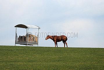 Gestuet Goerlsdorf  Pferd frisst auf der Weide aus einer ueberdachten Heuraufe