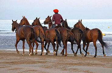 Deauville  Polopferde werden am Strand von Reitern ausgefuehrt