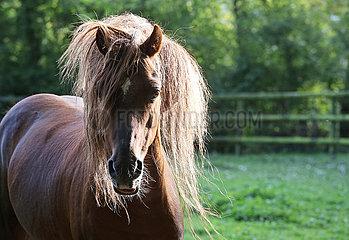 Michendorf  Pferd mit Speckhals auf einer Koppel