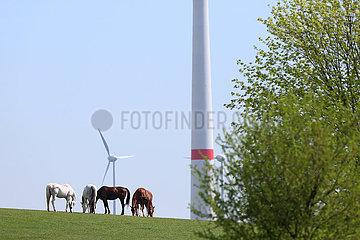 Gestuet Goerlsdorf  Windraeder stehen hinter einer Pferdeweide