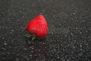 Berlin  Deutschland  reife Erdbeere liegt auf nassem Asphalt