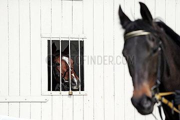 Hannover  Deutschland  Pferd schaut aus einer Box heraus auf einen Artgenossen