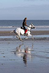 Deauville  Polopferd wird am Strand galoppiert
