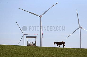 Gestuet Goerlsdorf  Windraeder hinter einer Pferdeweide