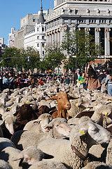 Spanien-Madrid-Transhumance Festival