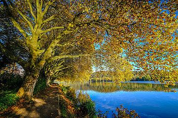 Goldener Herbst am Baldeneysee  Essen  Nordrhein-Westfalen  Deutschland